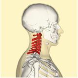 clínica de exame de imagem de ressonância magnética da coluna cervical Chora Menino